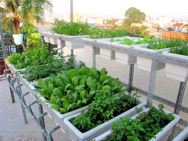 Lợi ích của việc trồng vườn trên sân thượng tại nhà